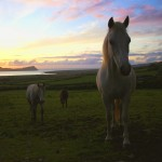 horses-and-the-3-sisters